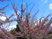2020.03.15福壽山農場千櫻園:IMG_3304.JPG