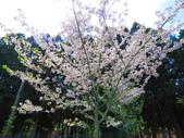 2020.03.15福壽山農場千櫻園:IMG_3305.JPG