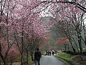 2011.02.18櫻花密境-武陵農場:DSCF0952.JPG