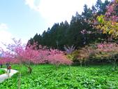 2020.03.15福壽山農場千櫻園:IMG_3309.JPG