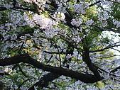 2010.03.19阿里山賞櫻:DSC07778.JPG