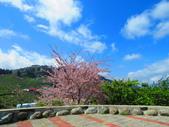 2020.03.15福壽山農場千櫻園:IMG_3298.JPG