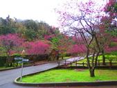 2019.03.09九族文化村櫻花祭:IMG_1211.JPG