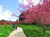 2020.03.15福壽山農場千櫻園:IMG_3310.JPG