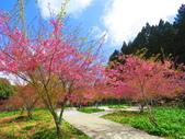2020.03.15福壽山農場千櫻園:IMG_3313.JPG
