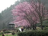 2011.02.18櫻花密境-武陵農場:DSCF0954.JPG