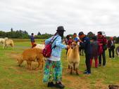 2019.03.12紐西蘭南北島之旅:北島愛哥頓牧場IMG_1751.JPG