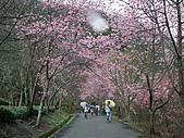 2011.02.18櫻花密境-武陵農場:DSCF0955.JPG