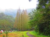 2015.10.11宜蘭福山植物園:IMG_2325.JPG