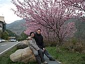 2011.02.18櫻花密境-武陵農場:DSCF0887.JPG