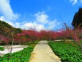2020.03.15福壽山農場千櫻園:IMG_3311.JPG