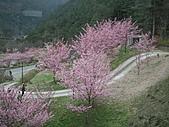 2011.02.18櫻花密境-武陵農場:DSCF0888.JPG