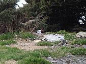 2007.05.10玉山北峰:DSC00334.JPG