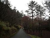 2011.02.18櫻花密境-武陵農場:DSCF0958.JPG