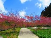 2020.03.15福壽山農場千櫻園:IMG_3312.JPG