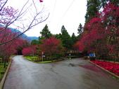 2019.03.09九族文化村櫻花祭:IMG_1209.JPG
