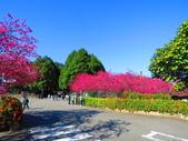 2021.02.15九族文化村:IMG_4742.JPG