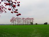 2020.03.14彰化竹塘木棉花:IMG_3291.JPG