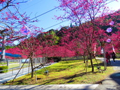 2021.02.15九族文化村:IMG_4751.JPG