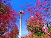2021.02.15九族文化村:IMG_4756.JPG