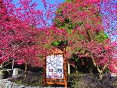 2021.02.15九族文化村:IMG_4797.JPG