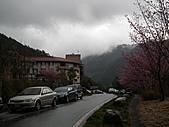 2011.02.18櫻花密境-武陵農場:DSCF0959.JPG