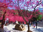 2021.02.15九族文化村:IMG_4801.JPG