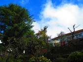 2018.12.15阿里山對高岳步道:IMG_0573.JPG