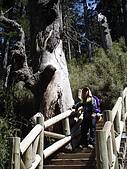 2007.05.10玉山北峰:DSC00291.jpg