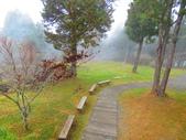 2018.12.15阿里山對高岳步道:IMG_0578.JPG