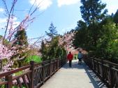 2020.03.15福壽山農場千櫻園:IMG_3302.JPG