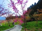 2020.03.15福壽山農場千櫻園:IMG_3318.JPG