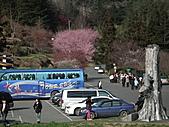 2011.02.18櫻花密境-武陵農場:DSCF0844.JPG