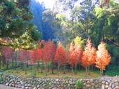 2019.11.23杉林溪森林生態渡假園區:IMG_2645.JPG