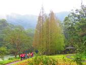2015.10.11宜蘭福山植物園:水杉