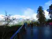 2018.12.15阿里山對高岳步道:IMG_0565.JPG