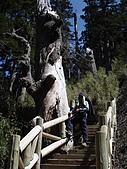 2007.05.10玉山北峰:DSC00289.jpg