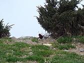 2007.05.10玉山北峰:DSC00335.JPG
