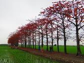 2020.03.14彰化竹塘木棉花:IMG_3266.JPG