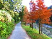 2019.11.23杉林溪森林生態渡假園區:IMG_2653.JPG