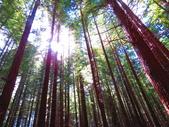 2019.03.12紐西蘭南北島之旅:北島紅木森林公園IMG_1768.JPG