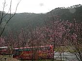 2011.02.18櫻花密境-武陵農場:DSCF0962.JPG
