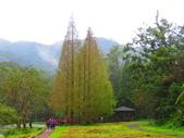 2015.10.11宜蘭福山植物園:IMG_2329.JPG