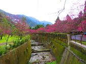 2019.03.09九族文化村櫻花祭:IMG_1208.JPG