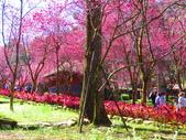 2021.02.15九族文化村:IMG_4810.JPG