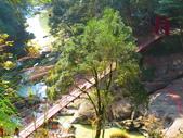 2019.11.23杉林溪森林生態渡假園區:IMG_2646.JPG