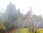 2018.12.15阿里山對高岳步道:IMG_0579.JPG