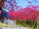 2021.02.15九族文化村:IMG_4913.JPG