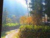 2019.11.23杉林溪森林生態渡假園區:IMG_2642.JPG