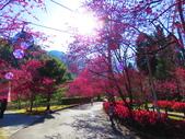 2021.02.15九族文化村:IMG_4752.JPG